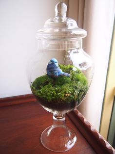 Old fashioned glass treat jar terrarium a spot of green life will do a tiny mechanical house good. already have a mason-ish looking jar marked out for the task. Now where can I find a pretty blue birdy. Terrarium Jar, Garden Terrarium, Succulent Terrarium, Lolly Jars, Air Cleaning Plants, Moss Garden, Old Fashioned Glass, Diy Interior, Cool Plants