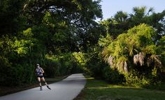 HUGH TAYLOR BIRCH STATE PARK --  Now, just a quick walk from the shops and condos that dominate the beach, this 180-acre swath of green has been called Fort Lauderdale's Central Park.