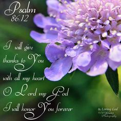 I will give thanks to your with all my heart.  O Lord my God I will honor you forever.  Psalms:  86:12
