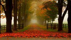 beautiful colorful road park hd wallpaper download