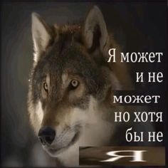 Hello Memes, Russian Humor, Happy Memes, Wolf Quotes, Quality Memes, You Are Perfect, Funny Relatable Memes, Reaction Pictures, Man Humor