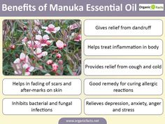 Manuka essential oil gives relief from dandruff, cough and cold, and insect bite and cures allergic reactions. It also relieves depression, anxiety, anger and stress.
