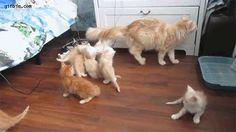 cat-moms-funny