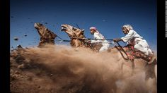 """""""Camel Ardah, as it called in Oman, is one of the traditional styles of camel racing ... between two camels controlled by expert men,"""" Al Toqi said. """"The faster camel is the loser ... so they must be running (at) the same speed level in the same track."""