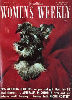 1963 Magazine Cover... Mini Schnauzer pup :)