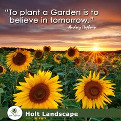 #Landscaping #LandscapeMaintenance #Landscape #Folsom