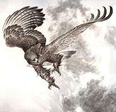 татуировки сокола эскизы: 16 тыс изображений найдено в Яндекс.Картинках