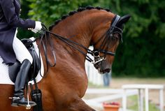 dressage braids | Dressage shows: What type of braids do you prefer and how much do you ...