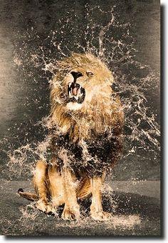 Shake that water off, Kitten.  Yeah!