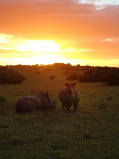 """Rhinos at Sunset"""