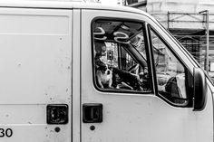 Oh Vienna . Andermatt, Vienna, Street Photography, Urban, Dog, Pictures, Diy Dog, Doggies, Dogs