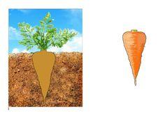 "Дидактична гра ""Що росте на городі"" Vegetable Garden"