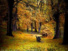 Фото красивая осень