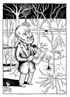 Santiago Ramón y Cajal drawing neurons. Nice illustration from Neurocomic: A Graphic Novel About How the Brain Works