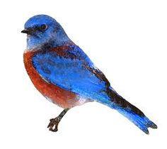 Image result for bluebird