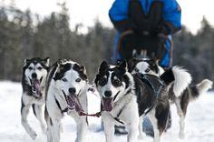 Come join us on a sleddog ride! Photo: Marcus Alatalo