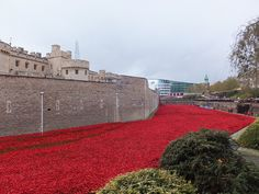 Tower of London Poppies - a sea of poppies - November 2014 Sea Of Poppies, Tower Of London, November, Sidewalk, Explore, Mansions, House Styles, November Born, Manor Houses