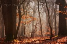 Deep in the woods by HJBH Photography on 500px
