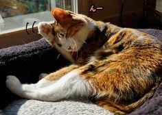 里親さんブログ毛づくろい - http://iyaiya.jp/cat/archives/71105