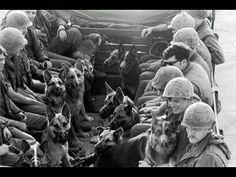 The True Story Of The Vietnam War - WAR DOGS- AMERICA'S FORGOTTEN HEROES