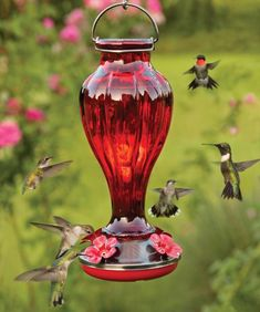 Blossom Hummingbird Feeder-The shapely sides of this red glass bottle feeder resemble the gently sloping petals found on hummingbirds favorite flowers. - My Gardening Path Hummingbird Nectar, Glass Hummingbird Feeders, Hummingbird Garden, Humming Bird Feeders, Humming Birds, Hummingbird Food, Bird Suet, Pretty Birds, Beautiful Birds