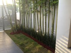 Jardín sencillo hecho con bambus, lirios y piedra de zenzontle