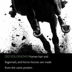 Horse Facts, Did You Know, Horses, Protein, Fun, Movie Posters, Film Poster, Horse, Billboard