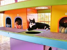My Dream house must include a place for my beloved  kittens and cats...a catio!  Humm... something like this would be awesome!