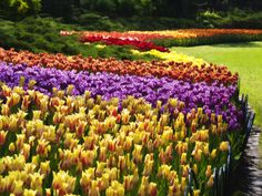 Tulip festival-Ottawa, Ontario - some of the many, many flower beds you will find around Parliament Hill, the Art Gallery, the National Art Centre, Dow's Lake and the Ottawa Experimental Farm, the Museum of Civilizations (Gatineau,Qc) and many other public and tourist areas -web -MR