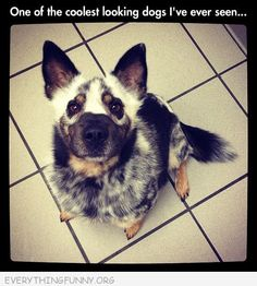 OMG. If this was my dog his name would be Captain Avenger!