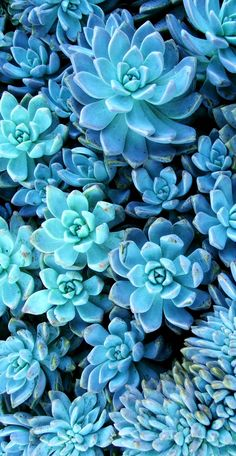 ➳ The smaller a #succulent is, the higher in elevation is its native habitat. » fun facts about #plants by @innatelygypsea