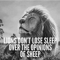 lions don't lose sleep.........