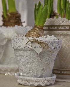 Pretty Plant Pot Painted White and Covered with Lace - nice Christmas or Valentine Gift
