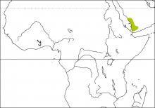 Arabian Waxbill (Estrilda rufibarba)