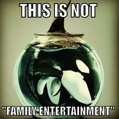 "Blackfish  It's incredible just , "" HOW CRUEL    HUMANS CAN BE"", to another species!!!"