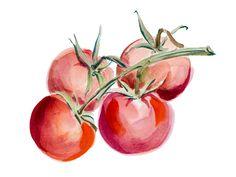 Achtung, Lektine! Warum Tomaten und Cashews ungesund sein können