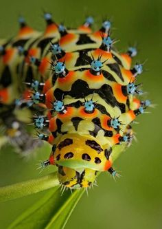 Colorful catterpilar
