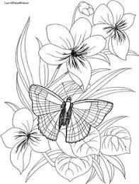 Image result for butterfly and flower drawing easy