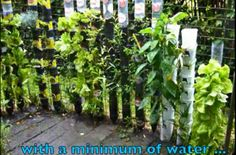 short on space? Grow herbs and vegetable gardens in recycled soda or water bottles into a tower with water system in small space and effort. Great for apartment dwellers.