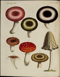 Fungi species | Flickr - Photo Sharing!