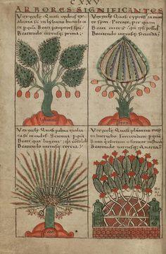 Le Liber Floridus de la main de Lambert (1120)