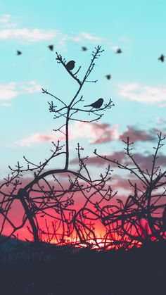 Find images and videos about nature, wallpaper and bird on We Heart It - the app to get lost in what you love. Phone Backgrounds, Wallpaper Backgrounds, Iphone Wallpaper, Nature Wallpaper, Cool Wallpaper, Twilight Poster, Jolie Photo, Cute Wallpapers, Aesthetic Wallpapers