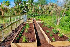 Raised bed gardens are easy to build, plant, and maintain! ~ Easy Edible Landscapes Miami