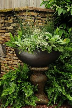 Simple Details: foliage container gardens... Container Plants, Container Gardening, Plant Containers, Container Design, Shade Plants, Potted Plants, Hanging Plants, Modern Garden Design, Garden Planters