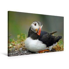 Papageitaucher #Puffins #Vögel #Leinwände #BabettsBildergalerie Animals, Little Birds, Animal Themes, Canvas Frame, Animales, Animaux, Animal, Animais