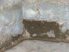 'Tis the rainy season. Are your cinder block walls wet?