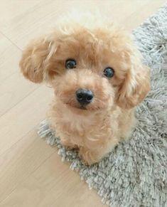 Realistic Teddy Dog sale deal