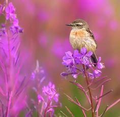 Photo Летние цвета by Влад Владиленов on 500px