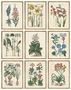William Stafford, De Bry Flowers (9-Pc)
