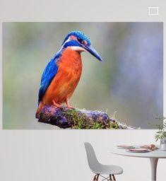 Portret van jagende Ijsvogel zittend op een boomtak. Kleurrijke portretfoto in herfstkleuren.<br><br>De ijsvogel (Alcedo atthis) is een waterminnende vogel uit de familie van ijsvogels (Alcedinidae). Het is een opvallende verschijning door zijn afstekende blauwe en oranje kleuren, maar ook een zeer schuwe soort die zich weinig laat zien. Alcedo atthis is de enige ijsvogelsoort die tot in noordelijk Europa voorkomt inclusief Nederland en België, althans de ondersoort Alcedo atthis ispida. De mees Bird, Canvas, Wall, Prints, Poster, Animals, Europe, Tela, Animales